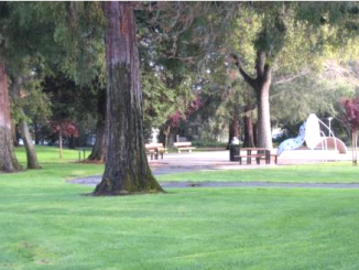 McKenzie Park in Los Altos. Photo from the city of Los Altos website.