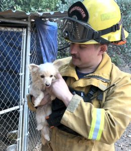 Redwood City Firefighter Brian Turner rescued this dog that was left at an evacuated home in Paradise without food.