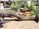 This tree branch came crashing down during a company picnic at Menlo College in 2017. Photo from video taken by the Menlo Park Fire Protection District.